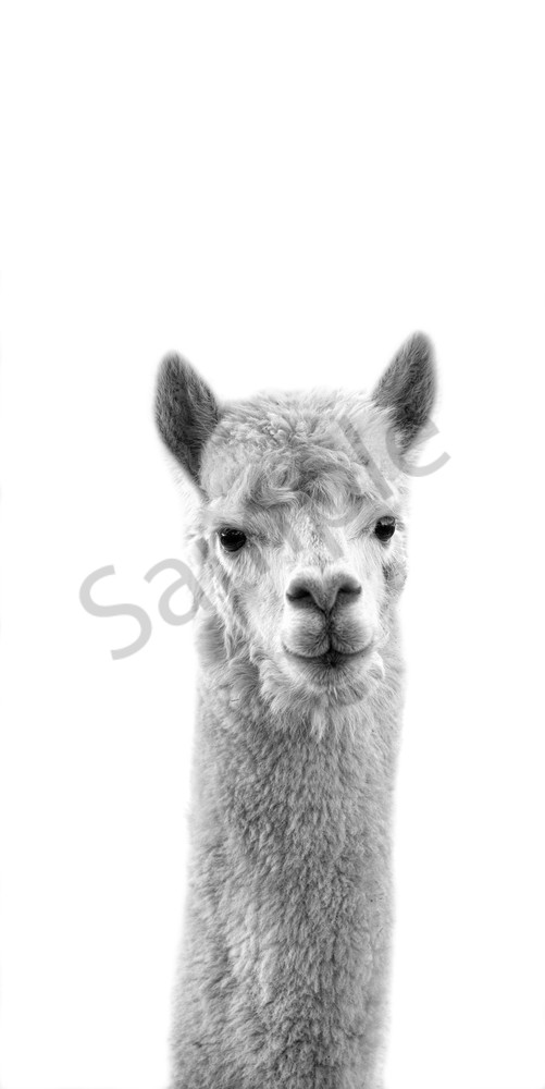Alpaca My Bags Photography Art   Beth Houts Photography