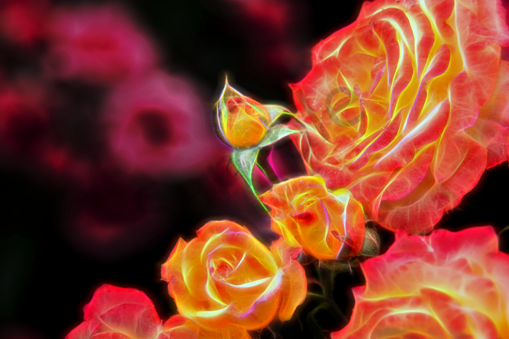 """""""Neon"""" roses and buds"""