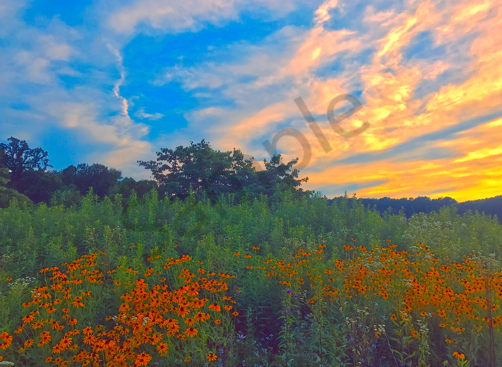 Field of Summer|Fine Art Photography by Artist Todd Breitling