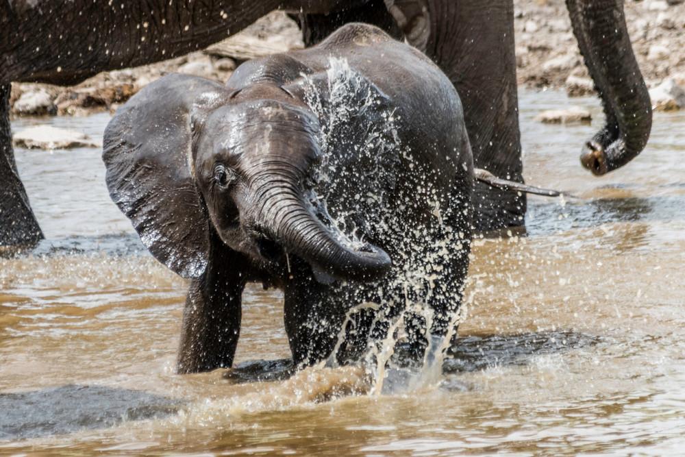Baby elephant splashing water