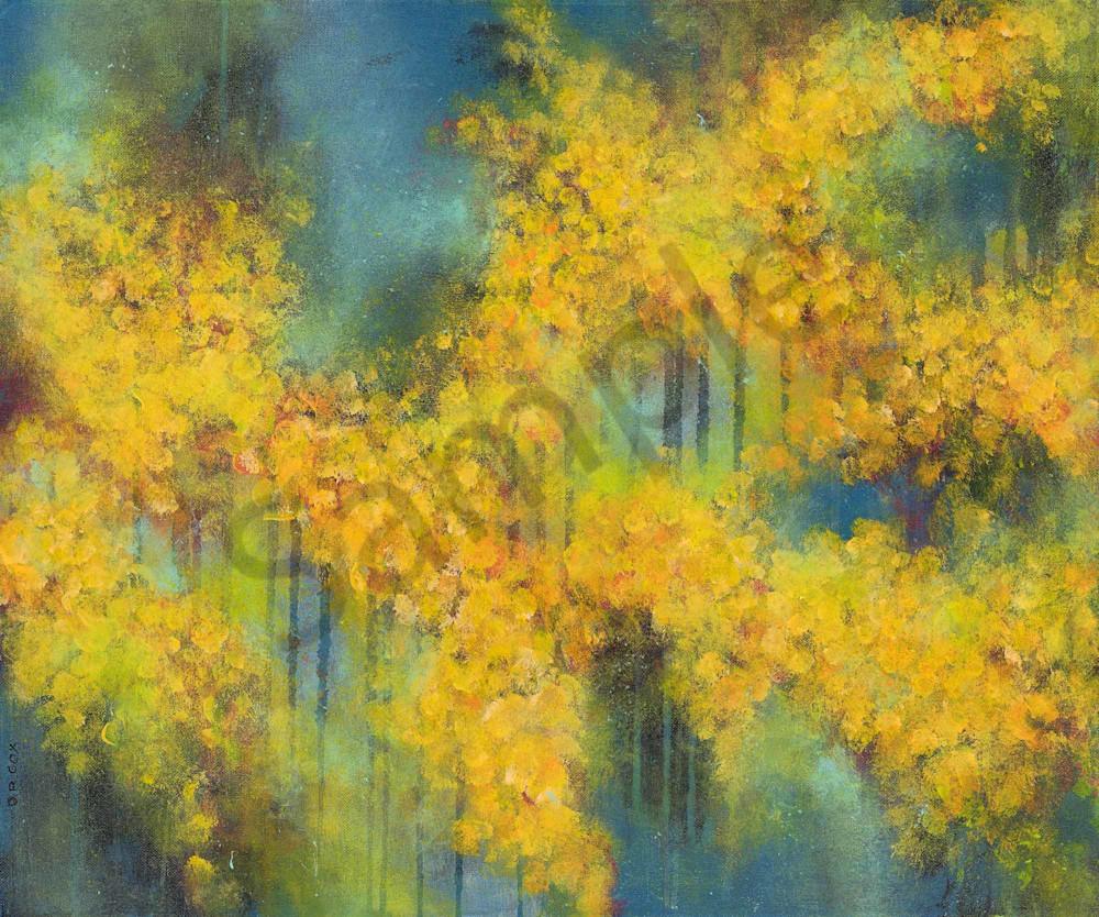 Spring Splendour Golden Wattle