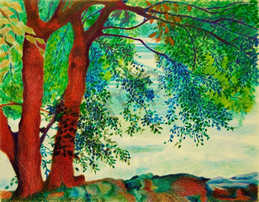 EWA COHEN'S TREE LANDSCAPE OF INWOOD PARK NATURE
