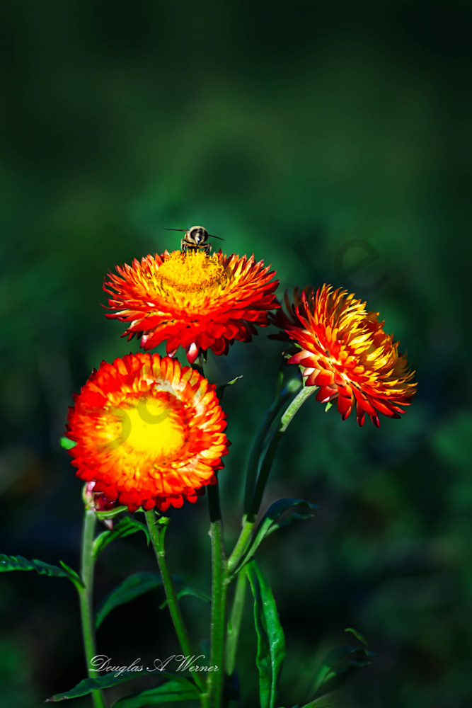 Mr. Pollinator   Art | AphotoApicture