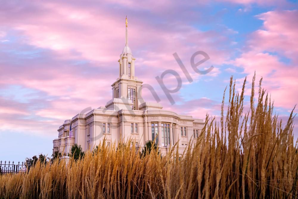 Harvest Wheat Photography Art | reflectedpixel