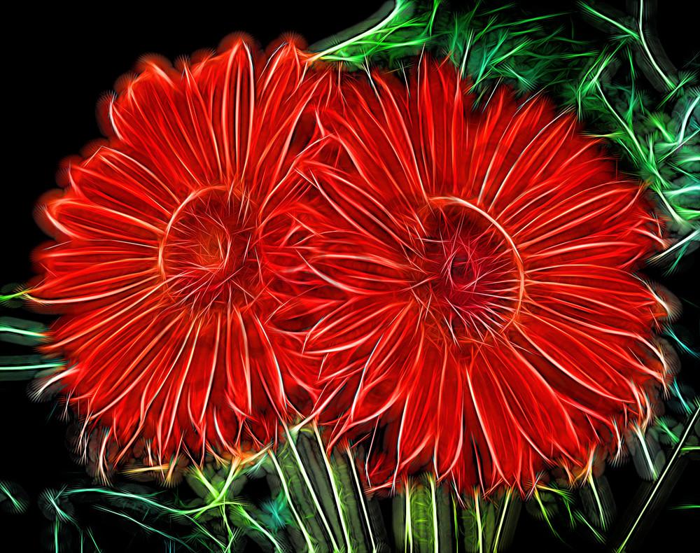 Electrifying Daises Photography Art   frednewmanphotography