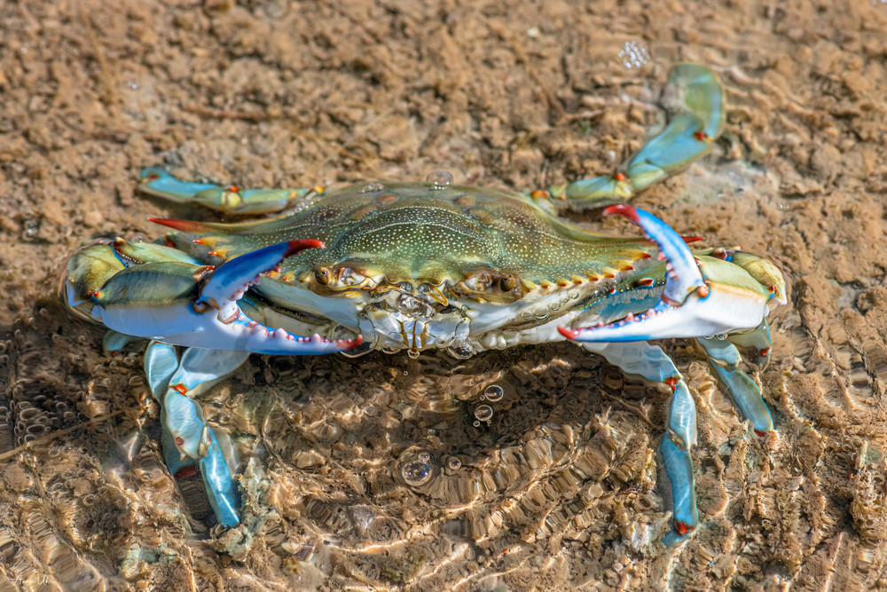 dont be crabby