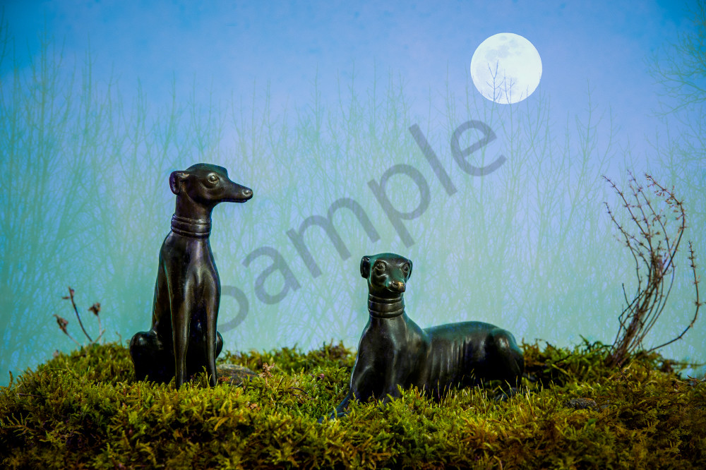 Moon Dogs Photography Art | Kim Bova Photography