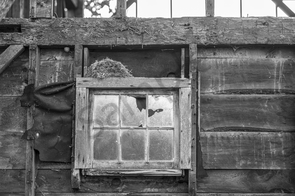 Abandoned nest, rustic barn, broken window, black and white