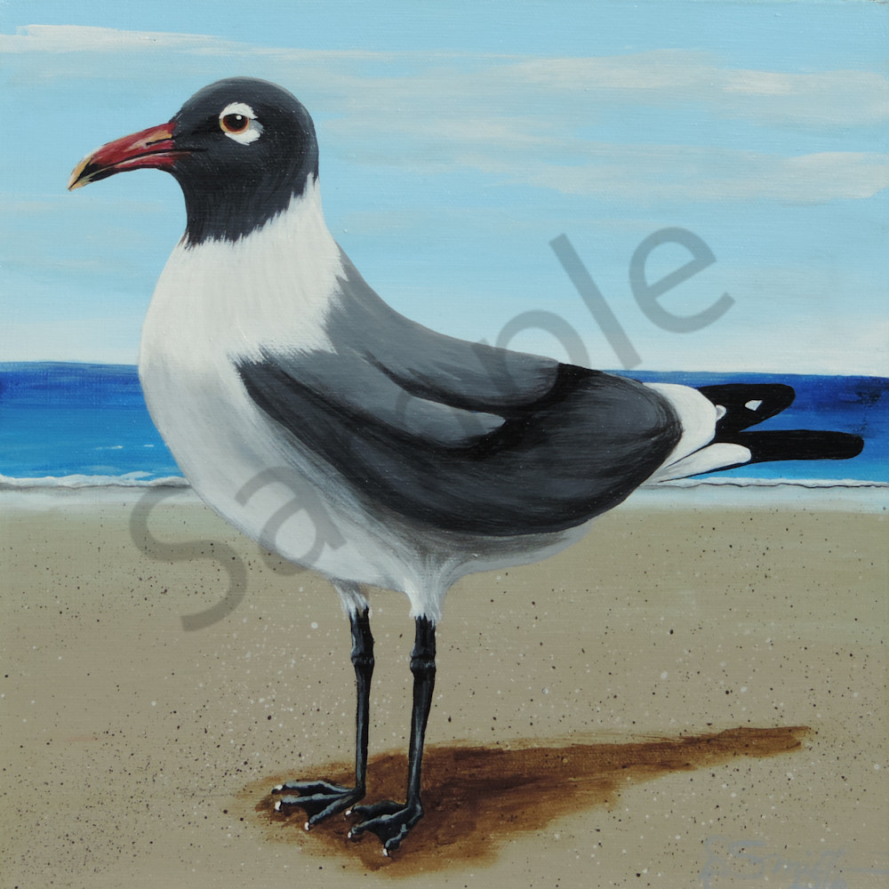 Gull Art | Shore Paintings