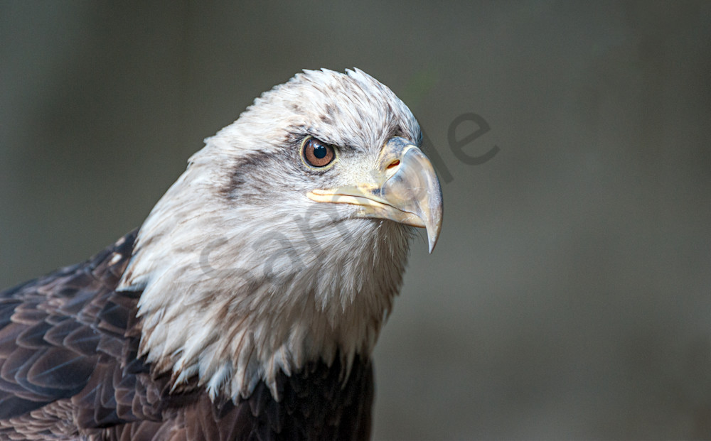 American Eagle ready to fly