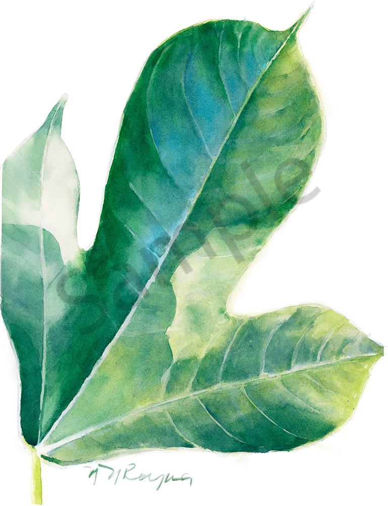 Single Jatropha Leaf Art   Nancy Reyna Fine Art