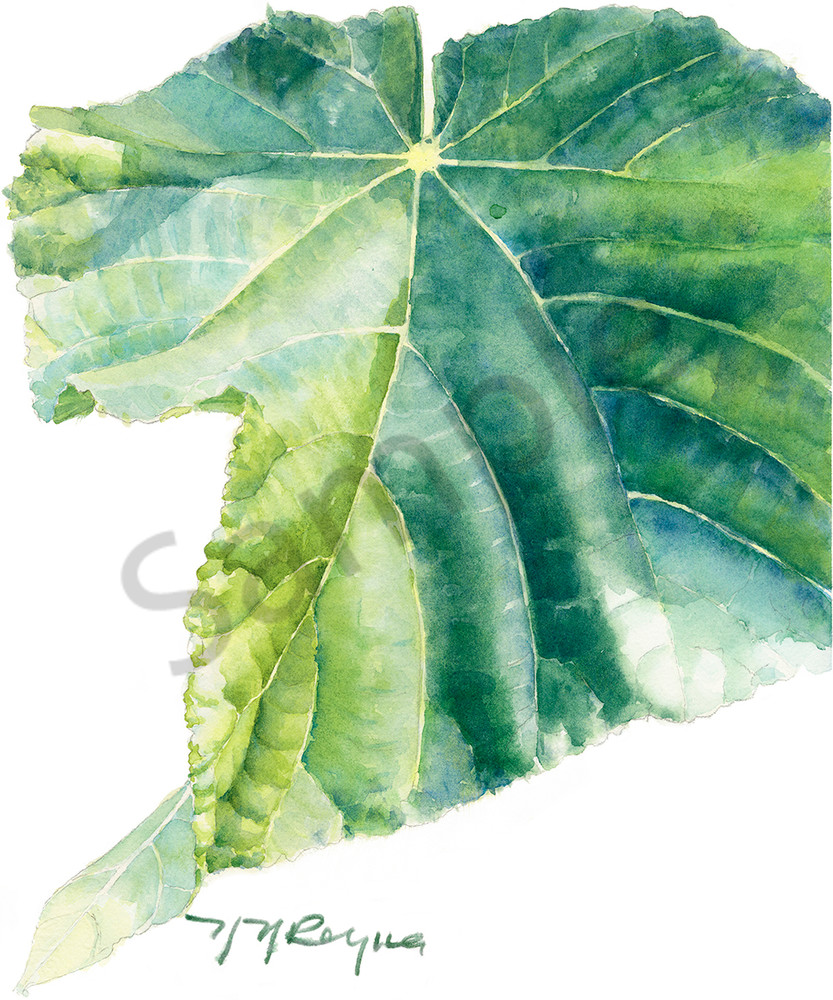 Single Dombeya Leaf Art | Nancy Reyna Fine Art