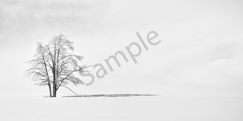 Winter Calm - Part 3 - Solace by a singular Tree Photographs Yellowstone National Park - Fine Art Prints on Metal, Canvas, Paper & More By Kevin Odette Photography