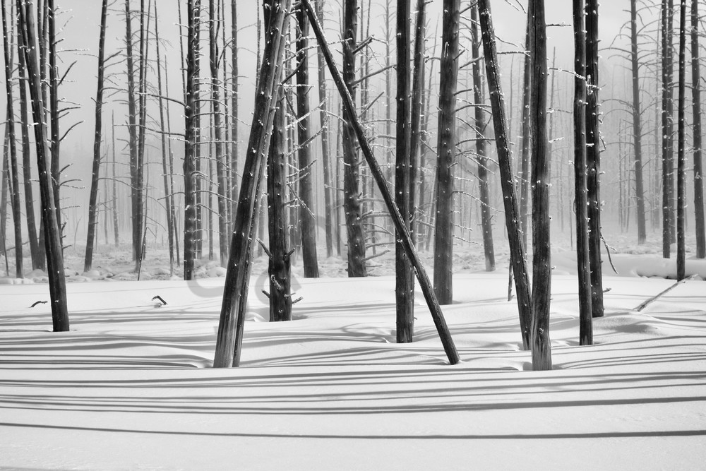 Shadowed Wood - Woodland Photographs Yellowstone National Park - Fine Art Prints on Metal, Canvas, Paper & More By Kevin Odette Photography