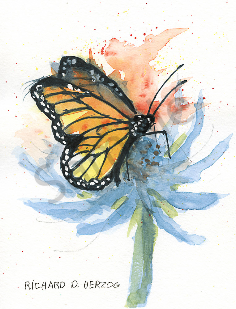 Butterfly 1 Art   Cincy Artwork