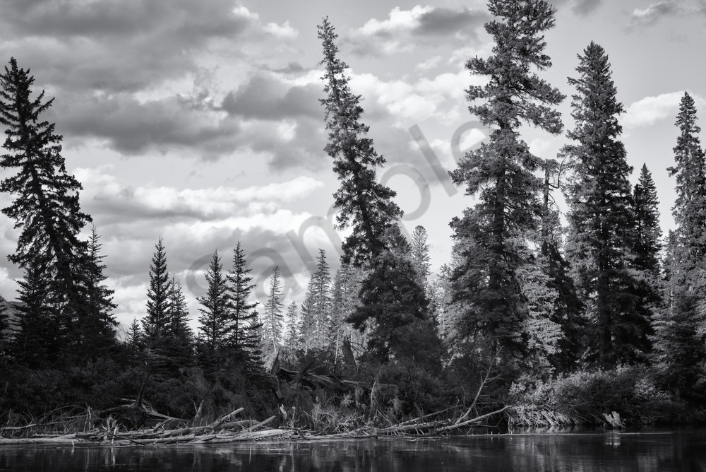 Trees & Clouds   Bow River Photography Art | Namaste Photography