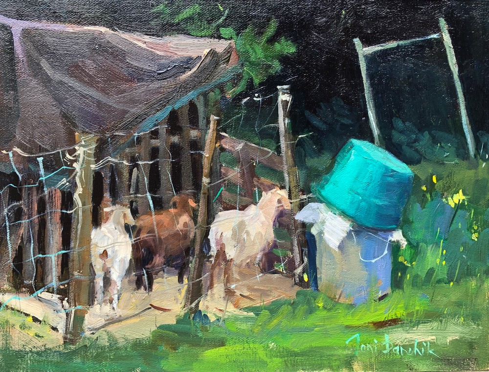 Goats in a pen
