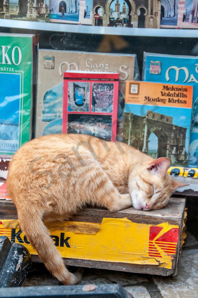 Kodak moment cat
