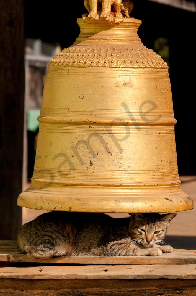 Bell Cat