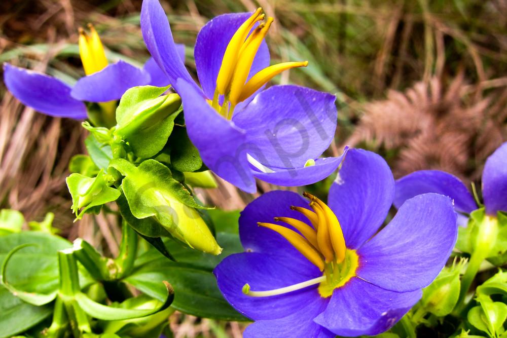 Purple flowers Sri-Lanka