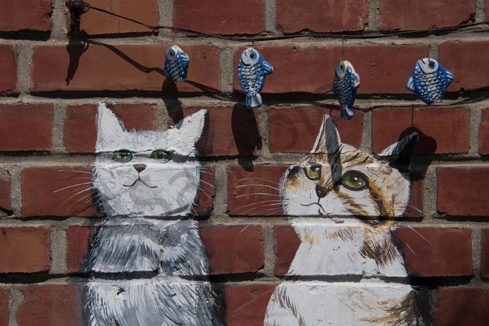 Cats fishing