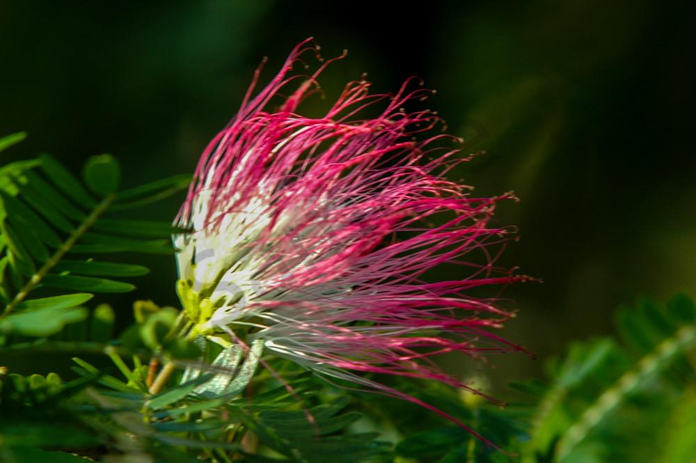 Tropical flower Costa Rica