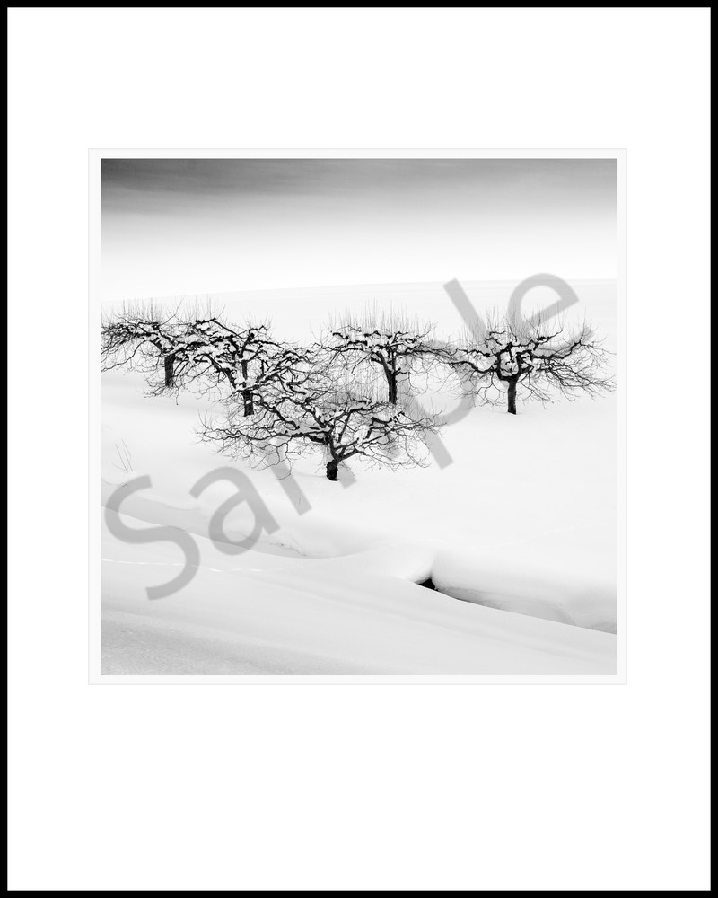 Orchard Tree Study7 Art | Roy Fraser Photographer