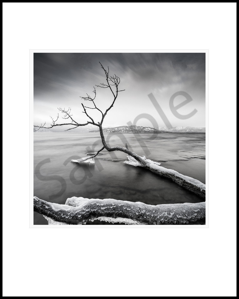 Running Branch Study2 Art | Roy Fraser Photographer