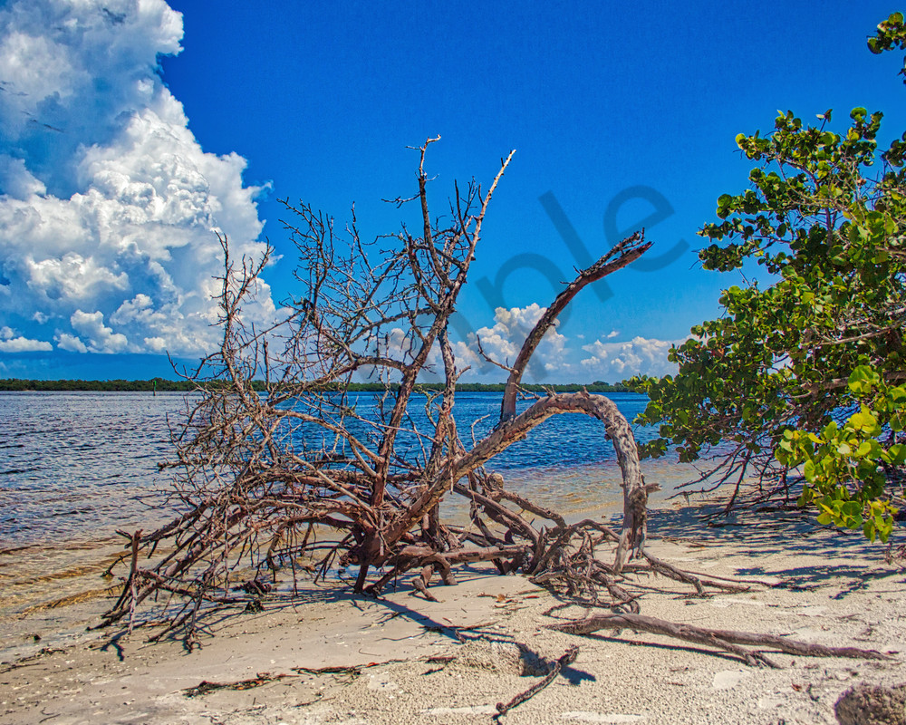 Driftwood Photography Art | It's Your World - Enjoy!