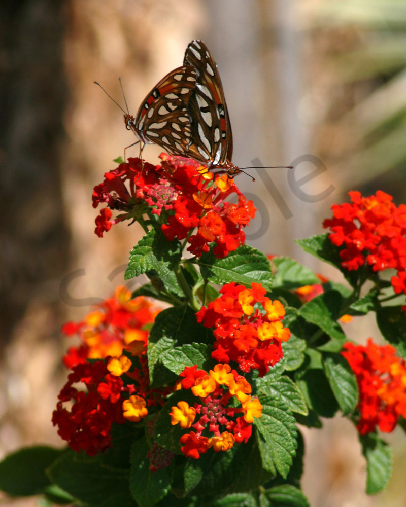 Butterfly Duet Photography Art | It's Your World - Enjoy!
