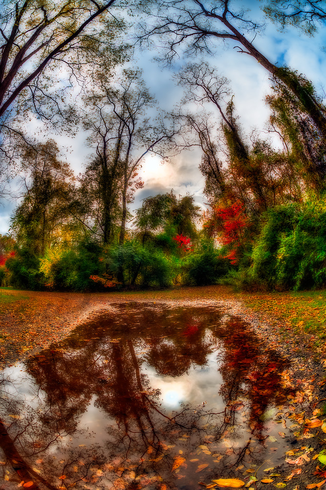 Reflection of fall foliage