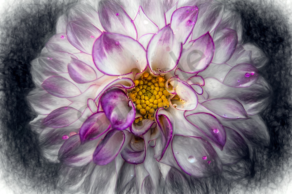 Mixed-media view of purple/white dahlia