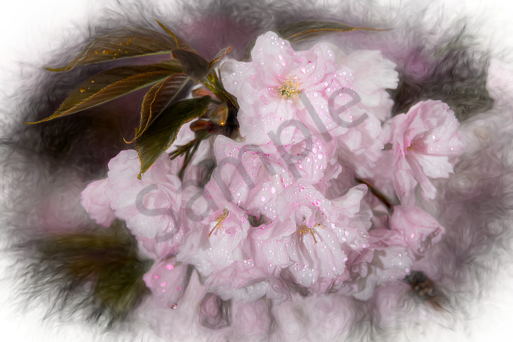 Impressionistic view of cherry blossoms