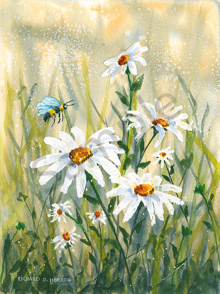 Daisies 2 Art | Cincy Artwork