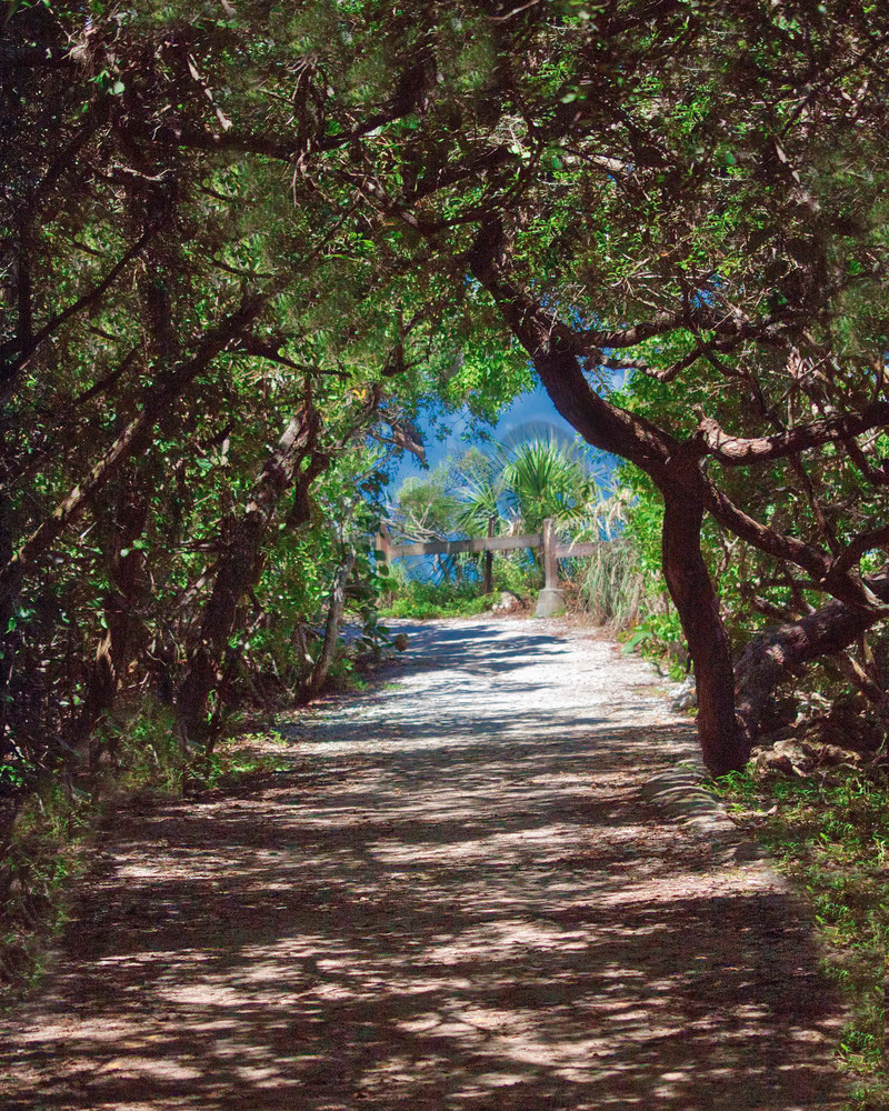 Shady Path Photography Art | It's Your World - Enjoy!