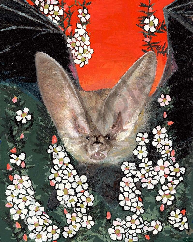 The Lesser Long-Eared Bat