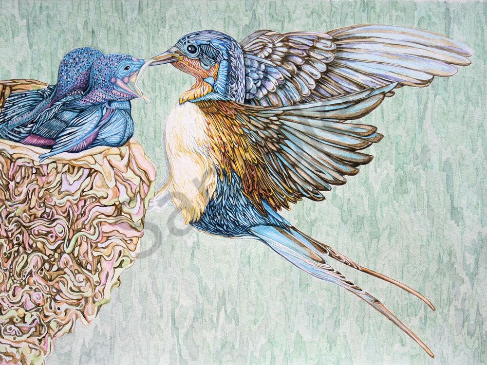 Barn Swallows watercolor bird portrait from Judy Boyd Watercolors