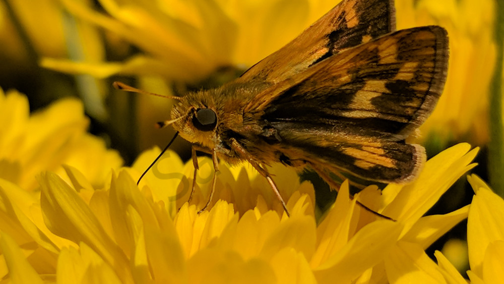Yellow Pollination Photography Art | Emily Rose the Artist