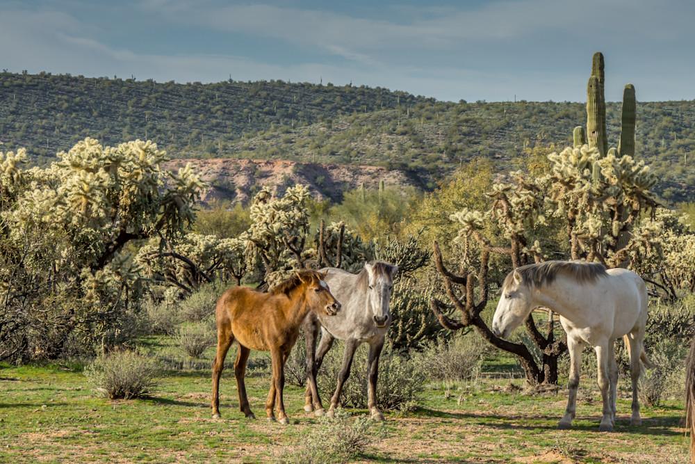 Family Gathering of Salt River wild horses