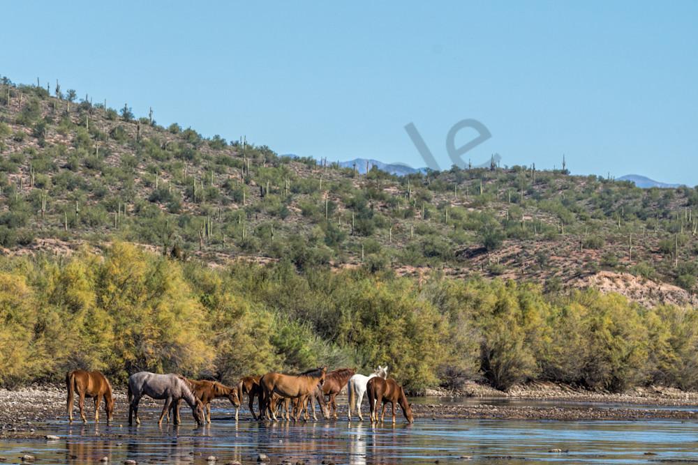 Salt River Wild Horse Family Reunion