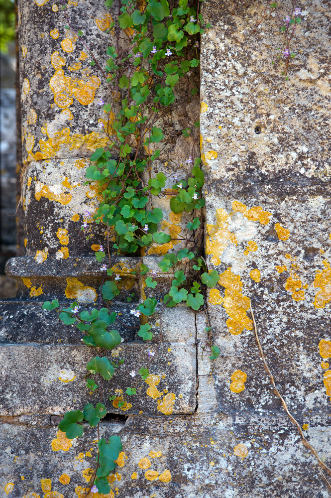 Stone And Vine, France Photography Art | Kim Bova Photography