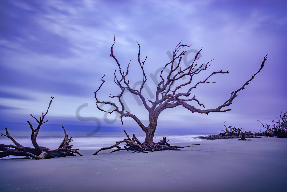 Driftwood Beach Sunrise | Susan J Photography