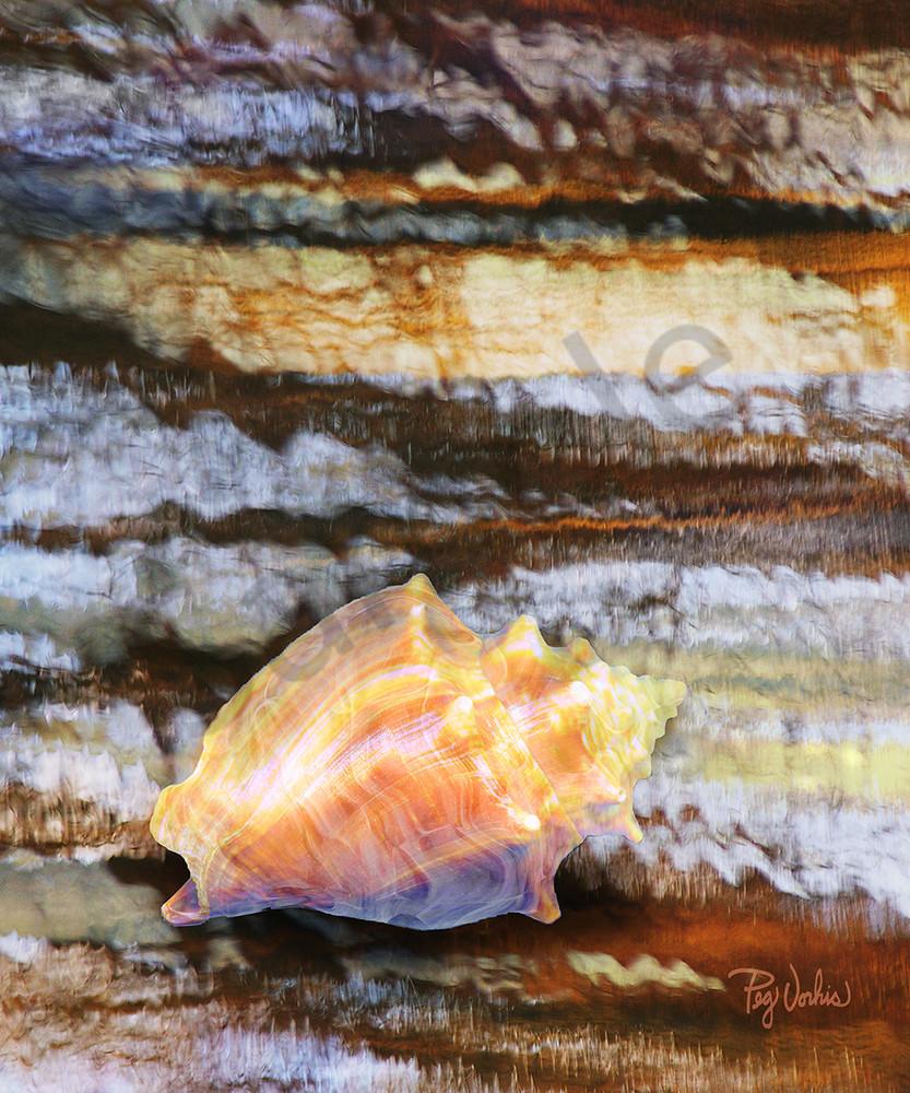 Conch Shell Art | Cincy Artwork