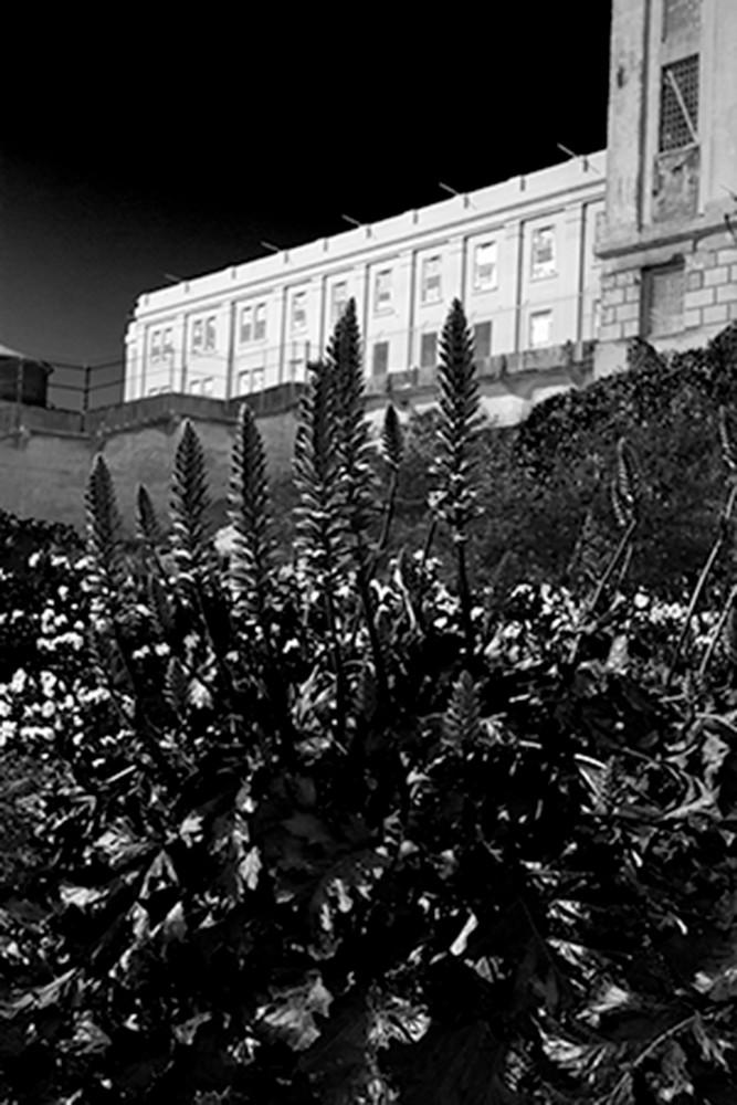 Alcatraz Larrain Photography Art | CLAUDIA LARRAIN