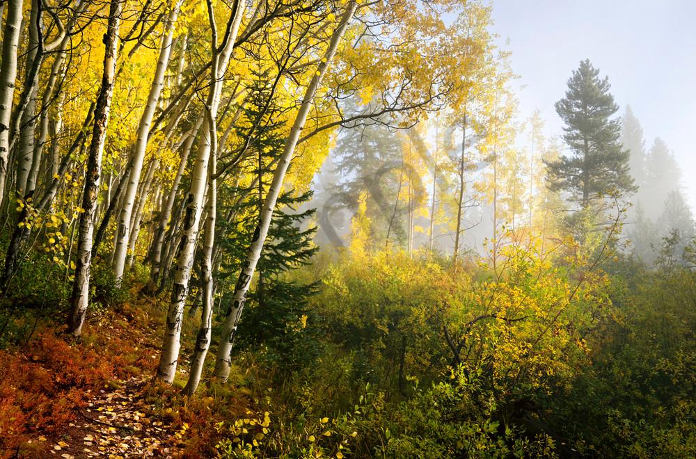 6880 Morning Fog Art | Cunningham Gallery