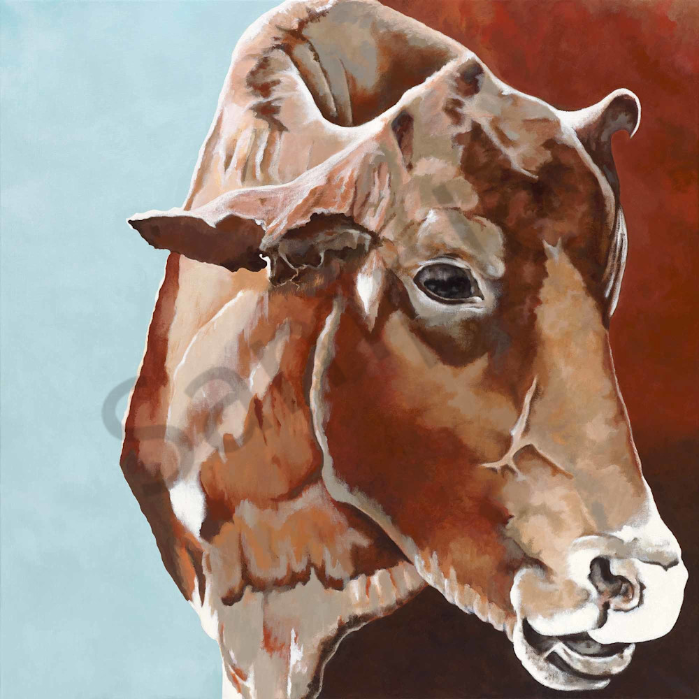 The Cow from Mullumbimby