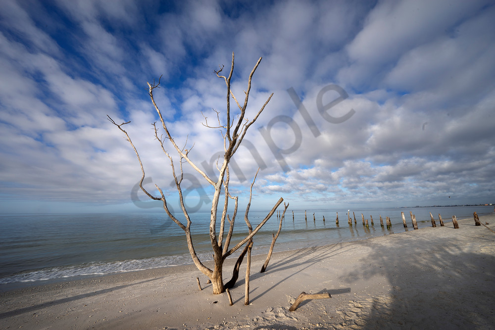 9779 Pier Posts And Tree Art | Cunningham Gallery