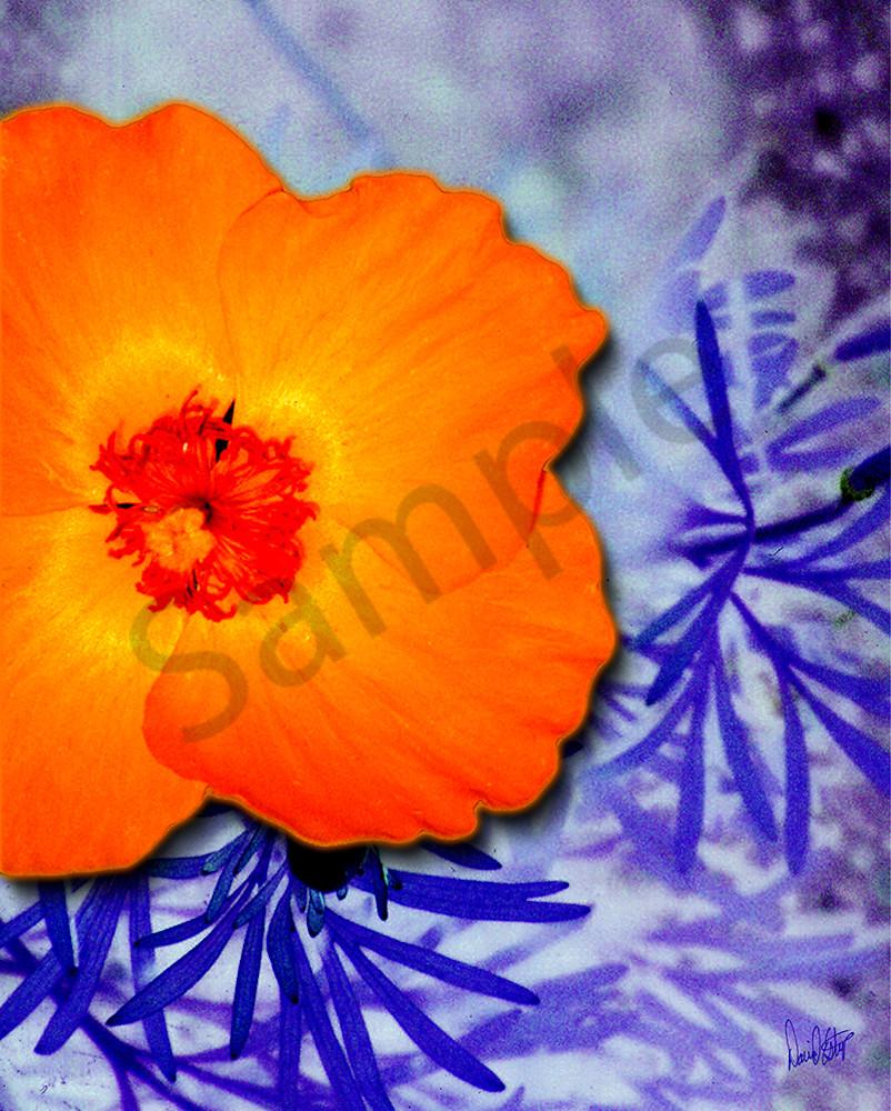 Flower 37 Art | Cincy Artwork