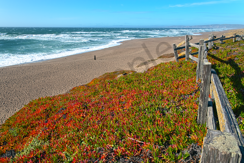 Art Print Point Reyes National Seashore California North Beach
