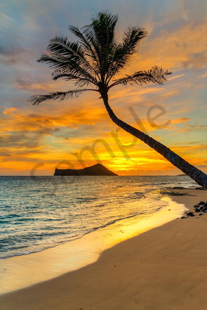 Kaiona Palm Sunrise